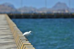 Schöner weißer Reiher nahe der komodo Insel in Indonesien lizenzfreie stockfotos
