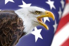 Schöner Weißkopfseeadler mit einem Hintergrund einer USA-Flagge Lizenzfreie Stockfotos