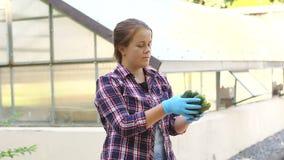 Schöner weiblicher Landwirt des Porträts in den blauen Handschuhen hält Gurken ernten stock footage