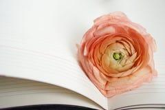 Schöner weicher gelber rosa Blume Ranunculus, der auf den Notizblock legt lizenzfreie stockfotos