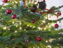 Schöner Weihnachtsbaum Stockfotos