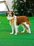 Schöner Weihnachtshund, Lieblingshaustiere und Weihnachten Kleiner netter lustiger Hund mit Weihnachtsdekoration stockbilder