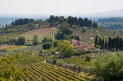 Schöner Weinberg in Italien Lizenzfreies Stockfoto