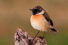 Schöner wilder Vogel gehockt auf einer Niederlassung Lizenzfreies Stockbild