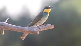 schöner wilder Vogel im Rücklicht stock footage