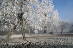 Schöner Winter Stockfotos