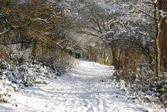 Schöner Winter lizenzfreie stockfotos