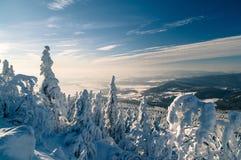 Schöner Winter Stockbild