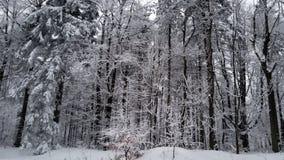 Schöner Winter in einem Wald in den Gebirgswinter-Idyllebäumen stockfotos