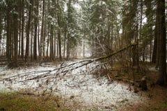 Schöner Winter Forest Scenic Landscape Stockfotos