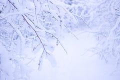 Schöner Winter Forrest Nature Landscape Lizenzfreie Stockbilder