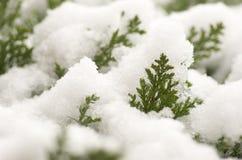 Schöner Winter mit Schnee bedeckte Anlagen Lizenzfreie Stockfotos