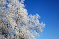 Schöner Winterbaumhintergrund lizenzfreie stockbilder