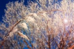 Schöner Winterhintergrund Stockbild