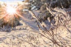 Schöner Winterhintergrund Stockfoto
