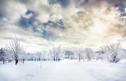 Schöner Winterpark Stockbild