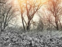 Schöner Winterpark im Sonnenuntergang Stockbilder