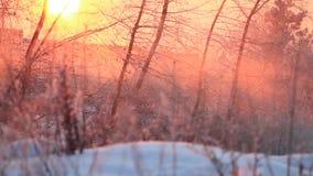 Schöner Wintersonnenglanz durch die Bäume stock footage