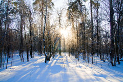 Schöner Wintersonnenuntergang mit Bäumen im Schnee Stockfotos