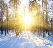 Schöner Wintersonnenuntergang mit Bäumen im Schnee Stockbilder