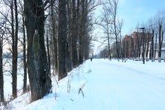 Schöner Wintertag Schnee auf der Straße Schneegasse Bäume unter dem Schnee Stockbilder