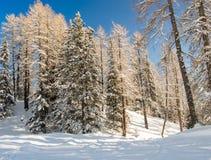Schöner Winterwald Lizenzfreies Stockfoto