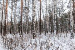 Schöner Winterwald Stockfoto