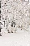 Schöner Winterwald Lizenzfreies Stockbild