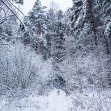 Schöner Winterwald mit vielen dünnen Zweigen bedeckt im Schnee Laufender Dalmatiner auf einem schneebedeckten Weg stockbild