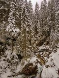 Schöner Winterwasserfall in den Tatry-Bergen in Polen lizenzfreie stockbilder