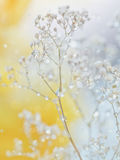 Schönes abstraktes Licht und unscharfer weicher Hintergrund mit Blume stockfotos