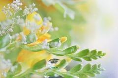 Schönes abstraktes Licht und unscharfer weicher Hintergrund mit Blume lizenzfreie stockfotos