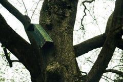 Schönes altes hölzernes Vogelhaus auf einem Baum im Gewächshaus in botan Lizenzfreies Stockfoto