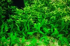 Schönes Aquarium. Stockfoto
