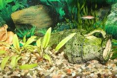 Schönes Aquarium mit Fischen Lizenzfreies Stockfoto