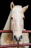 Schönes Arbeits-Pferd Lizenzfreie Stockfotografie