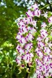 Schönes Bündel der Orchidee Lizenzfreie Stockfotos