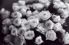 Schönes Bündel Schwarzweiss-Rosen nah herauf Bild lizenzfreies stockbild