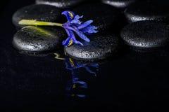Schönes Badekurortkonzept der blühenden Irisblume und des schwarzen Zen ston Lizenzfreie Stockfotos