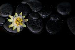 Schönes Badekurortkonzept der Passionsblumenblume auf Zensteinen Lizenzfreie Stockfotografie