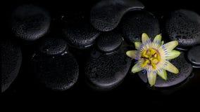Schönes Badekurortkonzept der Passionsblumenblume auf Zensteinen Stockfotos