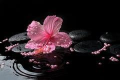 Schönes Badekurortkonzept des empfindlichen rosa Hibiscus, Zensteine Lizenzfreies Stockfoto