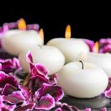 Schönes Badekurortstillleben der blühenden dunklen purpurroten Pelargonienblume Stockbild
