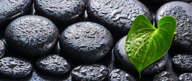 Schönes Badekurortstillleben der grüner Blatt Callalilie, -eises und -flieder Stockbilder