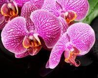 Schönes Badekurortstillleben des blühenden Zweigs streifte violette Orchidee ab Stockbilder