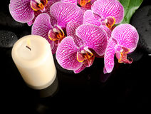 Schönes Badekurortstillleben des blühenden Zweigs streifte violette Orchidee ab Stockbild