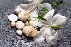 Schönes Badekurortstillleben des empfindlichen weißen Hibiscus, Zweig passio Stockfotos