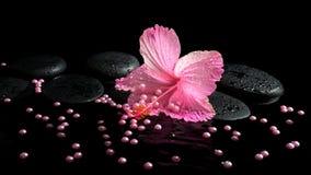Schönes Badekurortstillleben des rosa Hibiscus, der Tropfen und der Perlenperlen Lizenzfreie Stockbilder