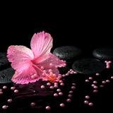 Schönes Badekurortstillleben des rosa Hibiscus, der Tropfen und der Perlenperlen Lizenzfreie Stockfotografie