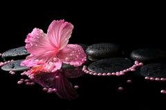 Schönes Badekurortstillleben des rosa Hibiscus, der Tropfen und der Perlenperlen Stockbild